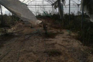 Снимка номер 1 за Продавам оранжерия Израелско производство 5000 кв.м
