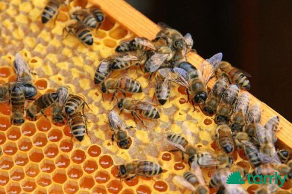 """Снимка номер 1 за Курс по """"Основи на пчеларството"""""""