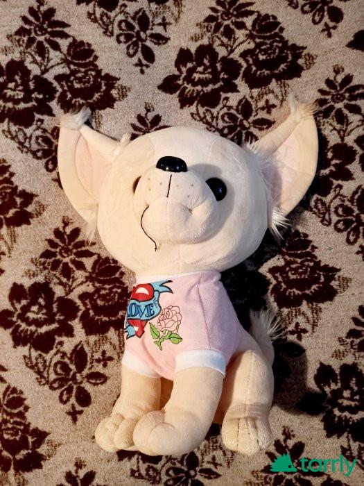 Снимка номер 1 за Куче Чихуахуа