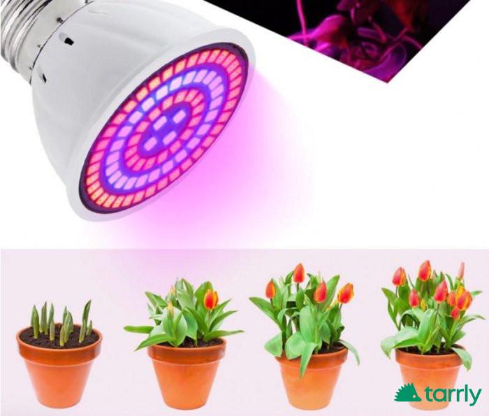 Снимка номер 1 за Пълноспектърна   фитолампа за стимулиране на растенията